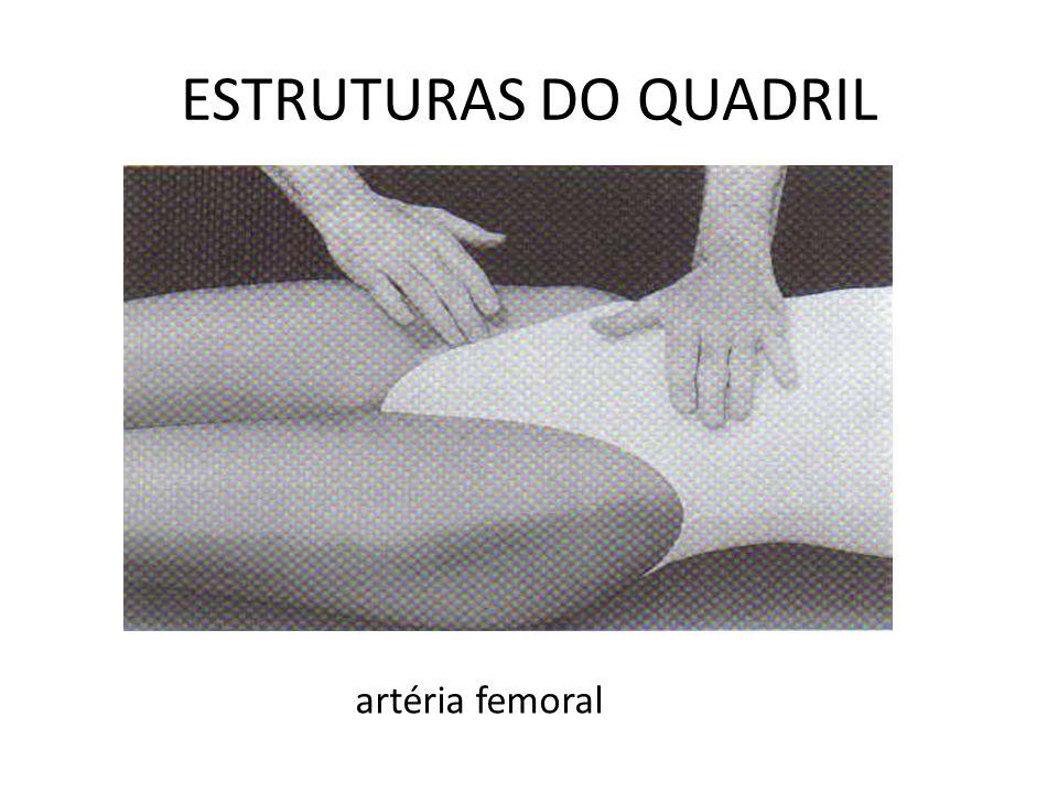 ESTRUTURAS DO QUADRIL artéria femoral