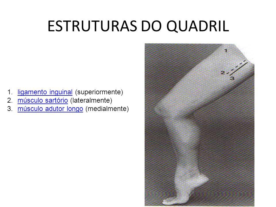 ESTRUTURAS DO QUADRIL ligamento inguinal (superiormente)