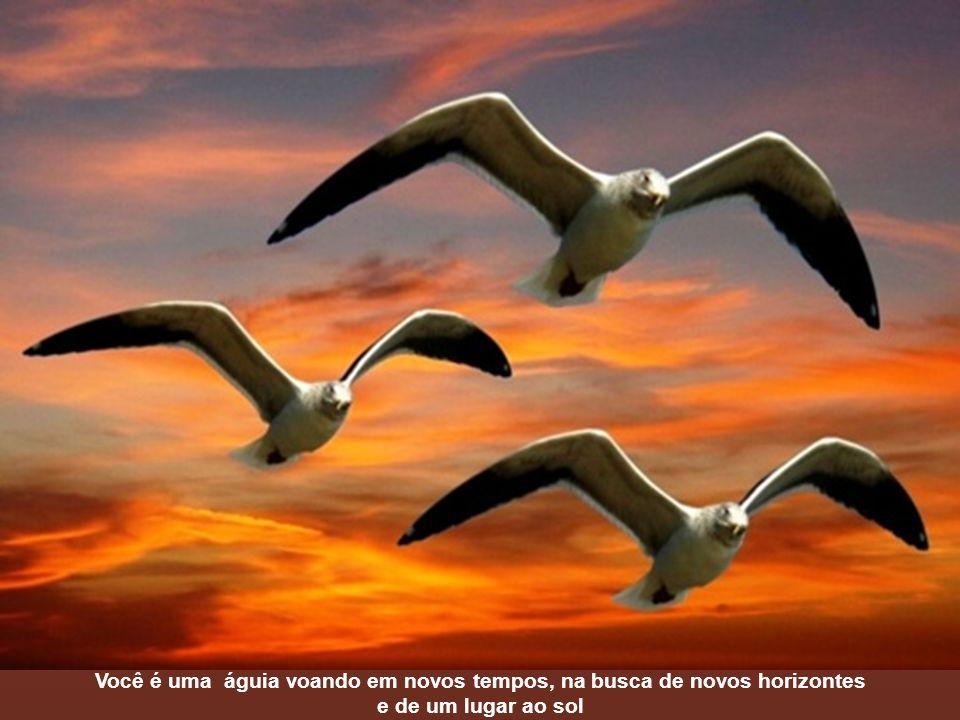 Você é uma águia voando em novos tempos, na busca de novos horizontes