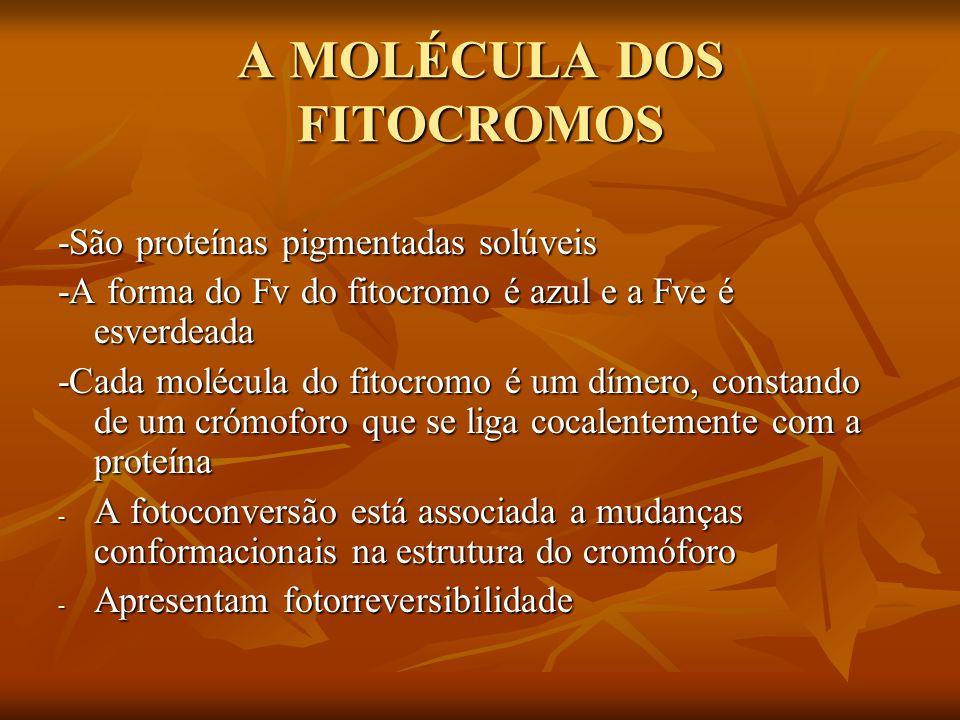 A MOLÉCULA DOS FITOCROMOS