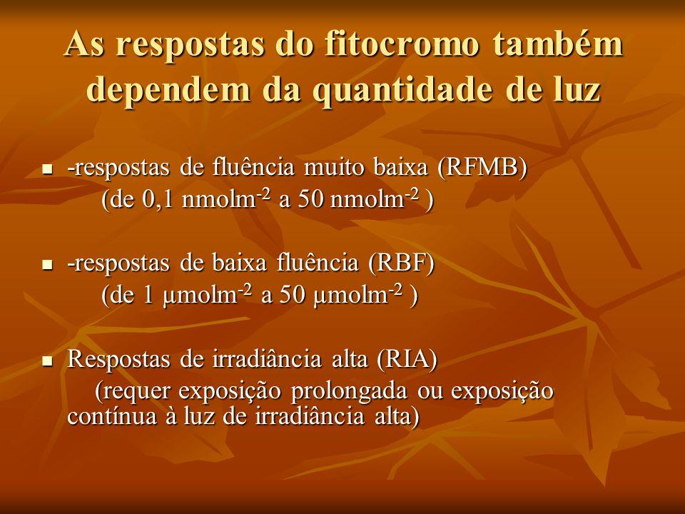 As respostas do fitocromo também dependem da quantidade de luz