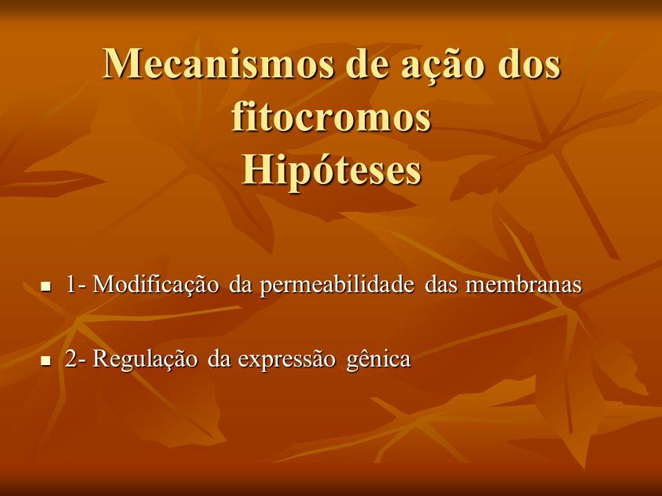 Mecanismos de ação dos fitocromos Hipóteses