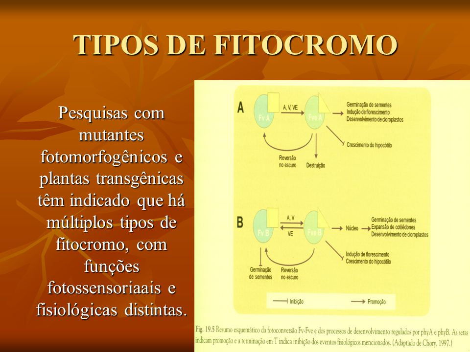 TIPOS DE FITOCROMO