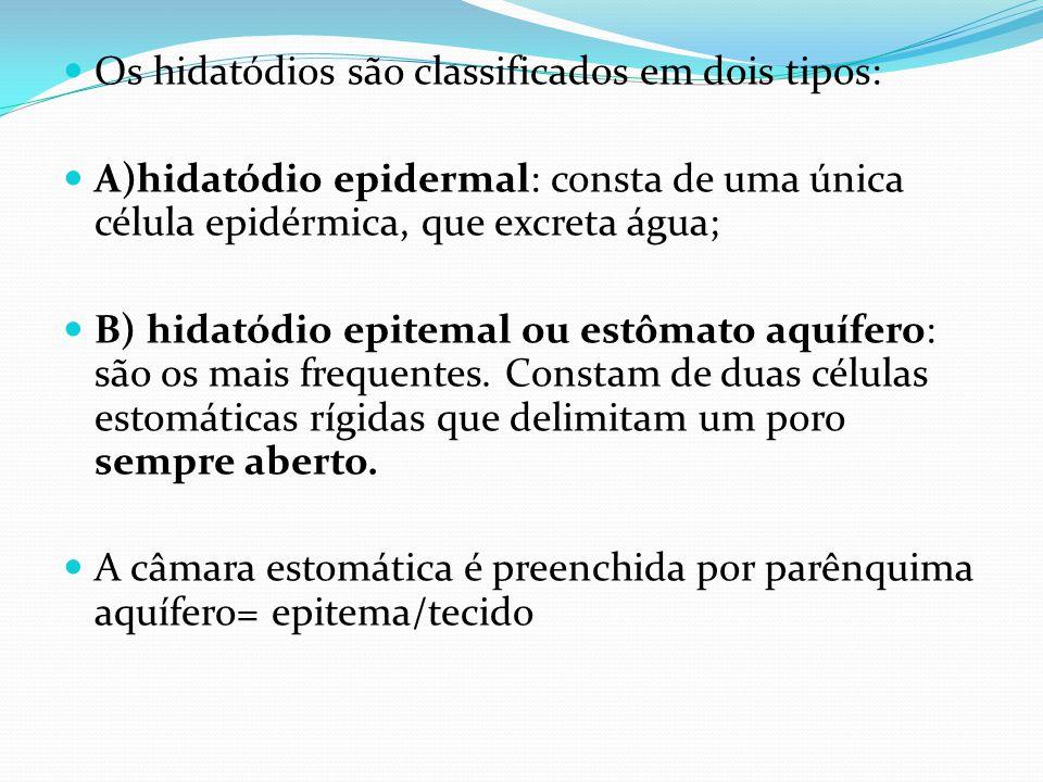 Os hidatódios são classificados em dois tipos: