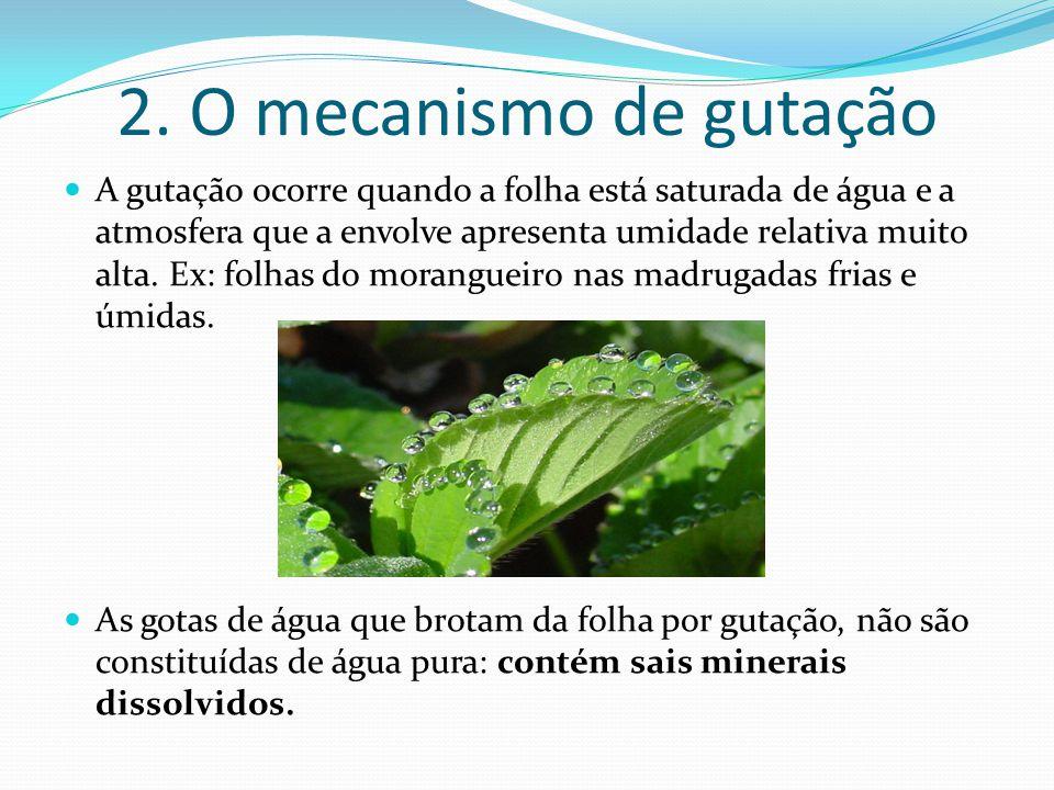 2. O mecanismo de gutação