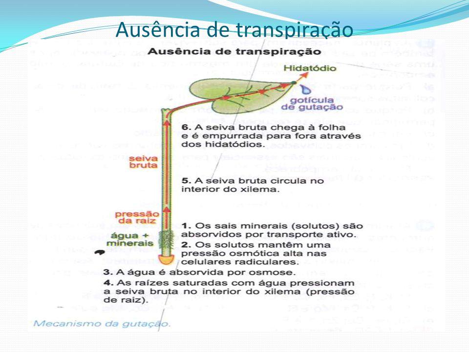 Ausência de transpiração