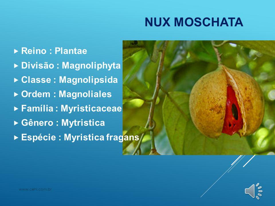 NUX MOSCHATA Reino : Plantae Divisão : Magnoliphyta