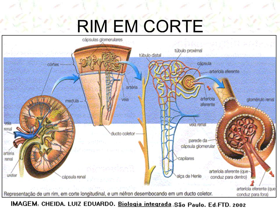 RIM EM CORTE