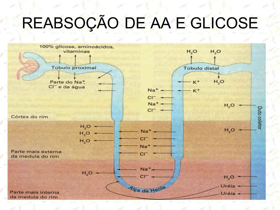 REABSOÇÃO DE AA E GLICOSE