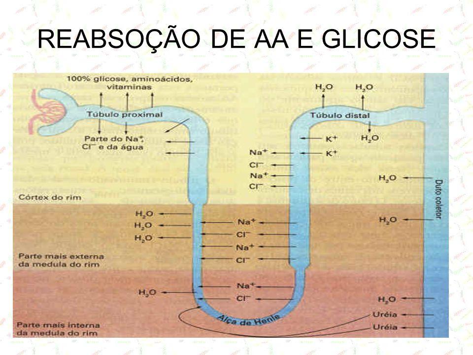 REABSOÇÃO DE AA E GLICOSE