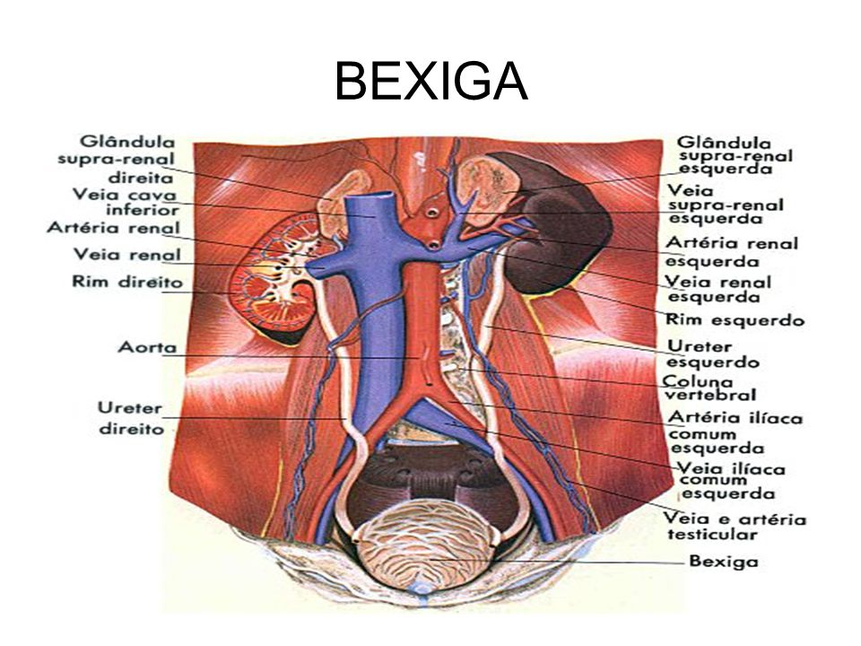 BEXIGA