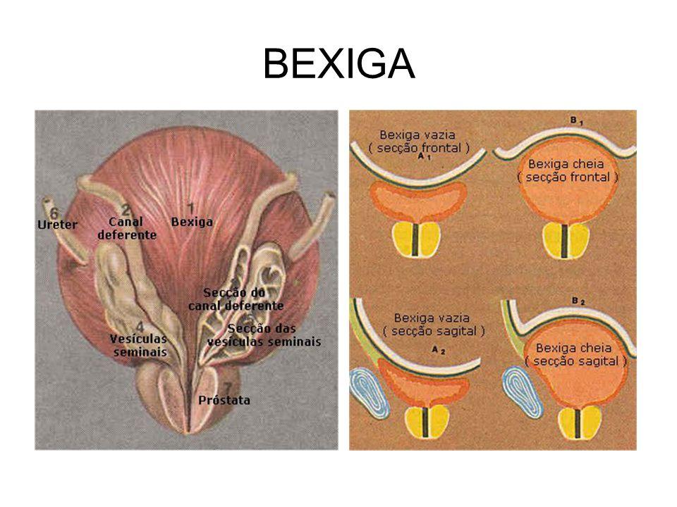 BEXIGA