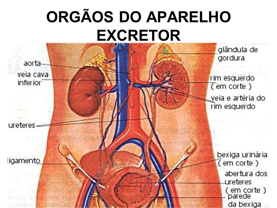 ORGÃOS DO APARELHO EXCRETOR