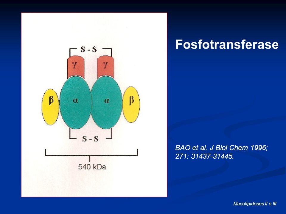 Fosfotransferase BAO et al. J Biol Chem 1996; 271: 31437-31445.