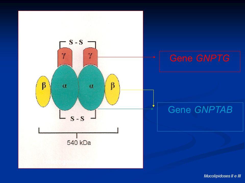 Heterogeneidade de lócus
