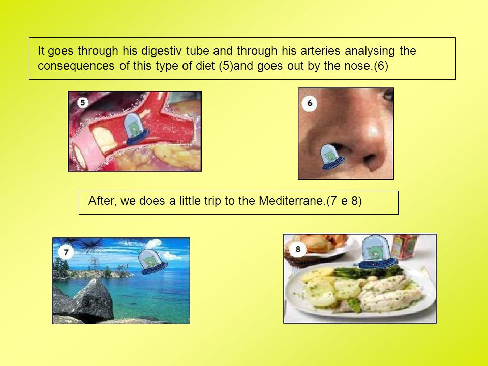 It goes through his digestiv tube and through his arteries analysing the consequences of this type of diet (5)and goes out by the nose.(6)