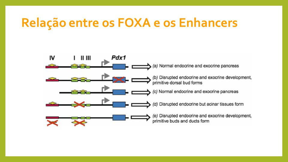 Relação entre os FOXA e os Enhancers