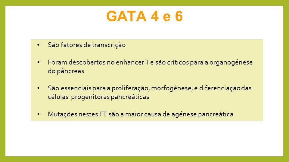 GATA 4 e 6 São fatores de transcrição