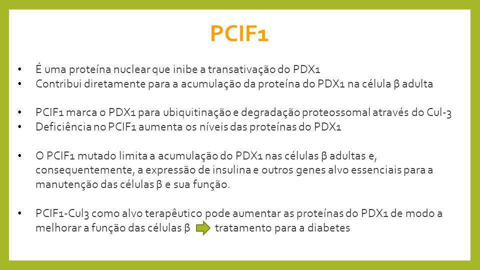 PCIF1 É uma proteína nuclear que inibe a transativação do PDX1