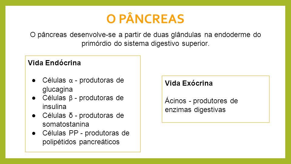 O PÂNCREAS O pâncreas desenvolve-se a partir de duas glândulas na endoderme do primórdio do sistema digestivo superior.