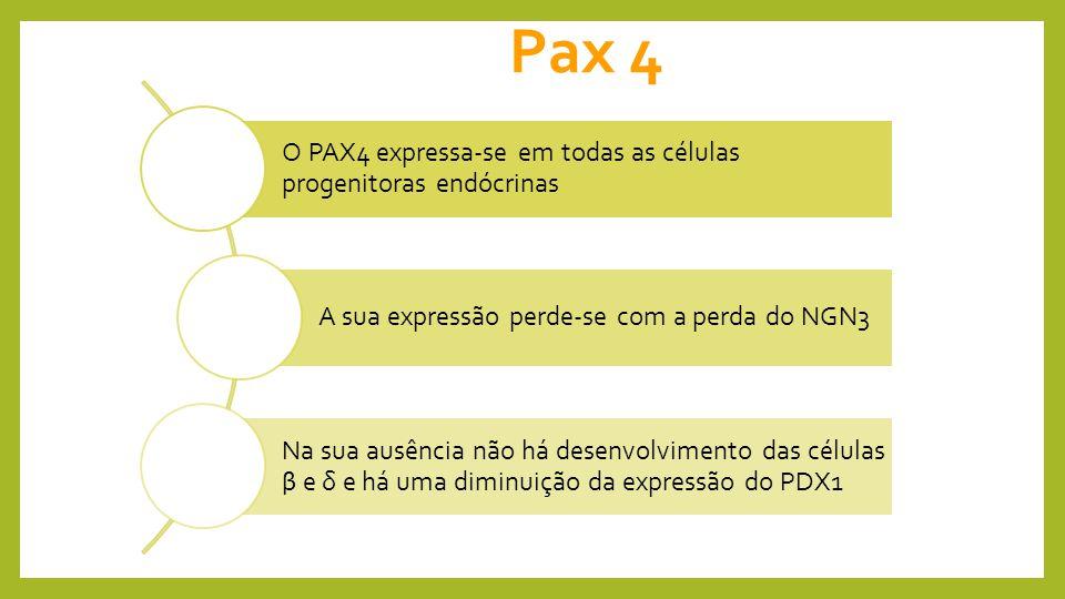 Pax 4 O PAX4 expressa-se em todas as células progenitoras endócrinas