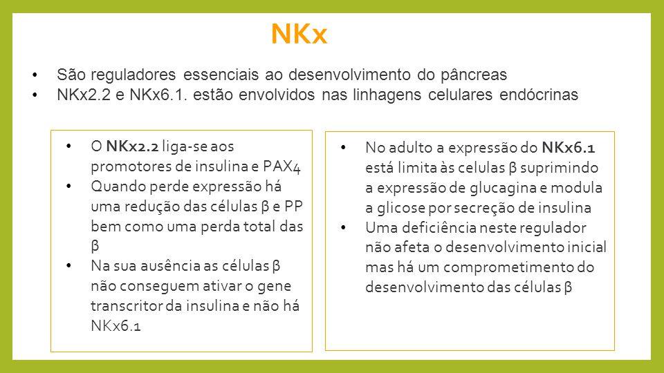 NKx São reguladores essenciais ao desenvolvimento do pâncreas