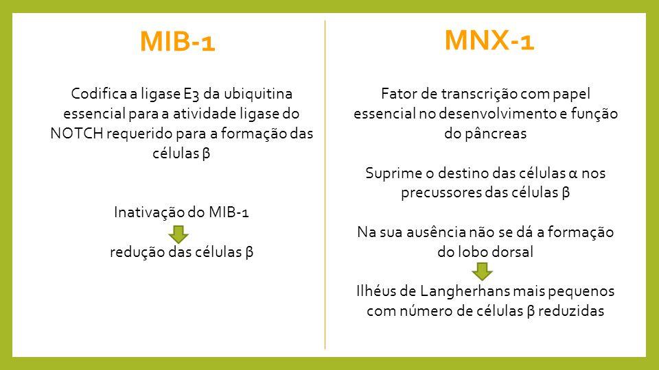 MIB-1 MNX-1. Codifica a ligase E3 da ubiquitina essencial para a atividade ligase do NOTCH requerido para a formação das células β.