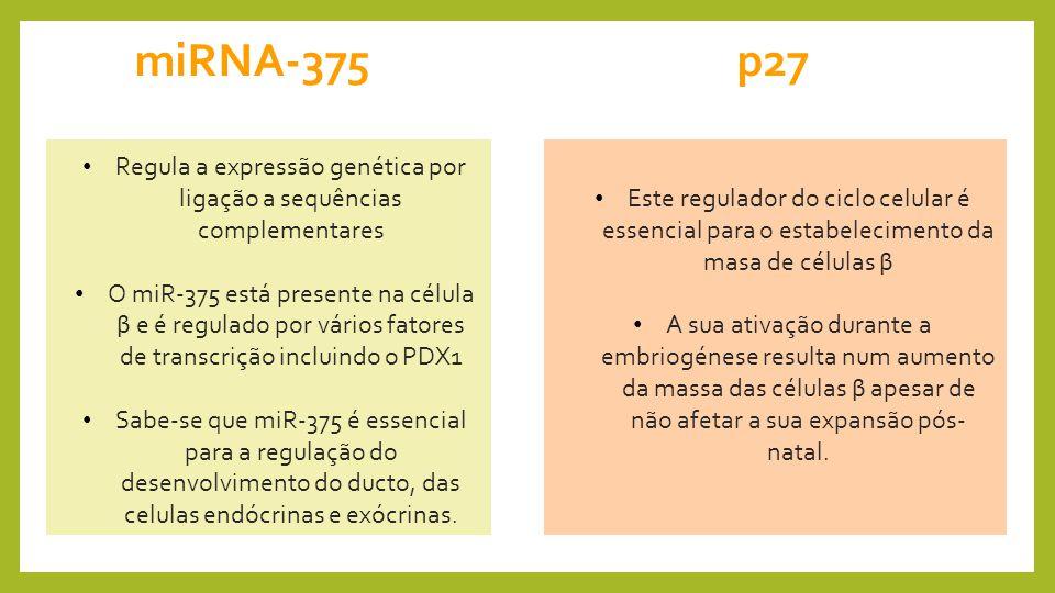 Regula a expressão genética por ligação a sequências complementares