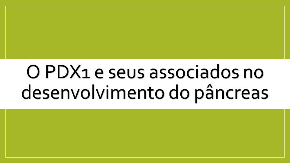 O PDX1 e seus associados no desenvolvimento do pâncreas