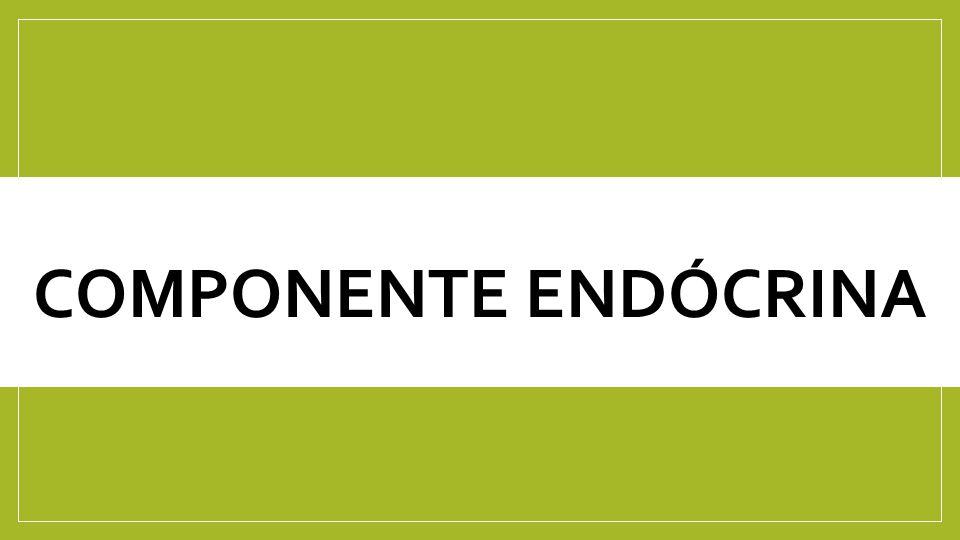 Componente Endócrina