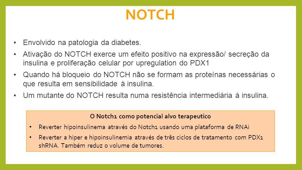 O Notch1 como potencial alvo terapeutico