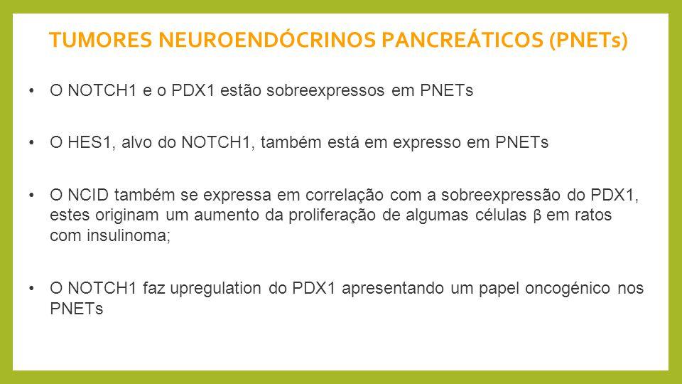 TUMORES NEUROENDÓCRINOS PANCREÁTICOS (PNETs)