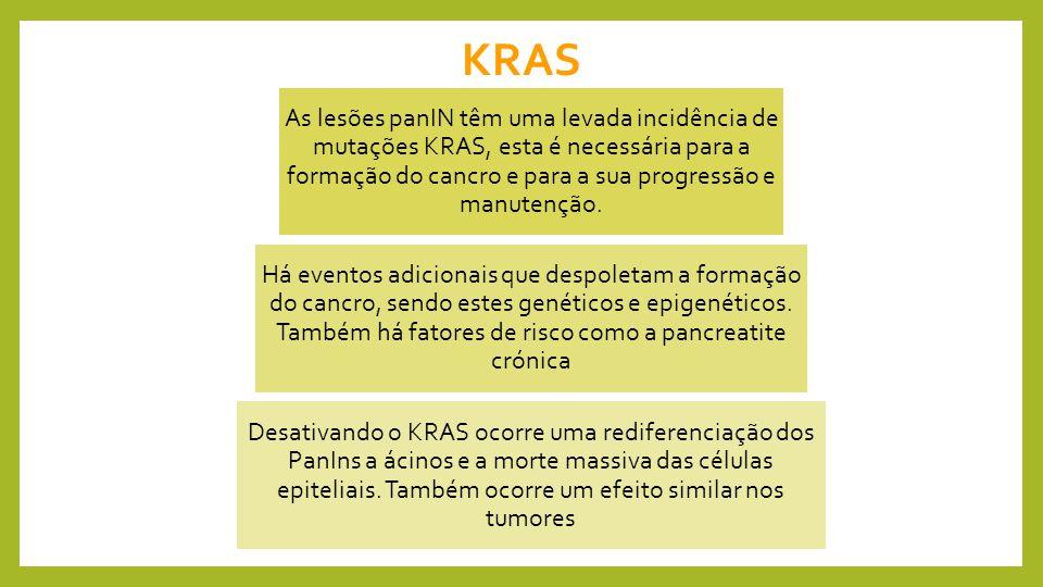 KRAS As lesões panIN têm uma levada incidência de mutações KRAS, esta é necessária para a formação do cancro e para a sua progressão e manutenção.
