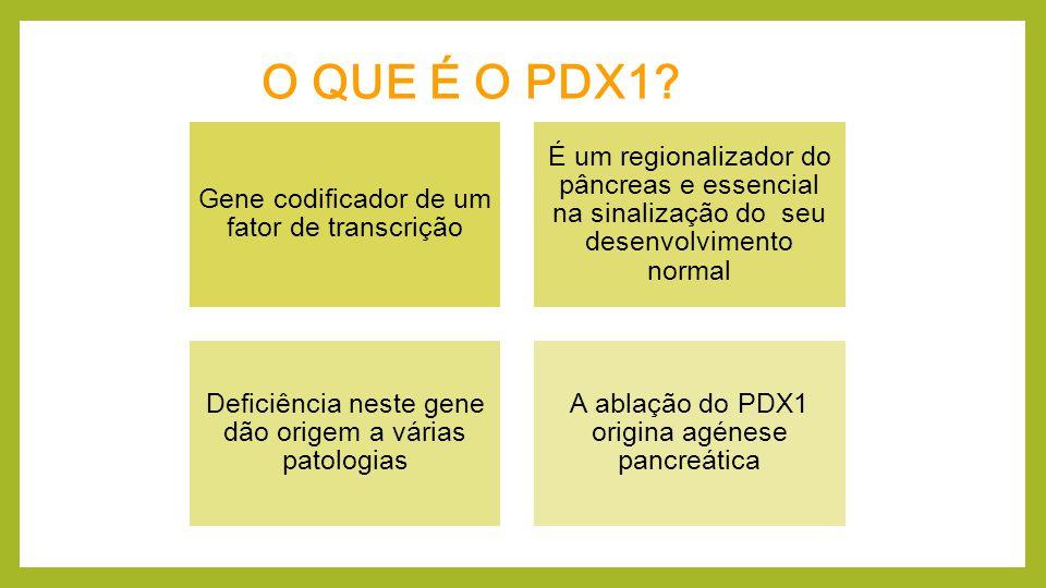 O QUE É O PDX1 Gene codificador de um fator de transcrição