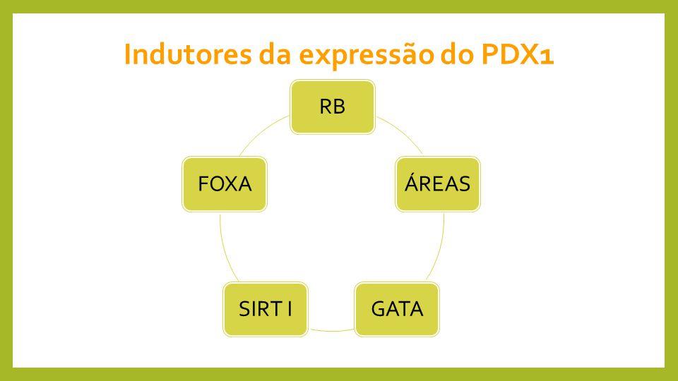 Indutores da expressão do PDX1
