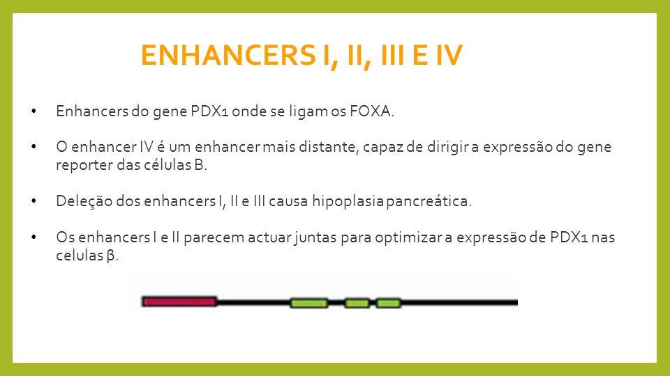 ENHANCERS I, II, III E IV Enhancers do gene PDX1 onde se ligam os FOXA.
