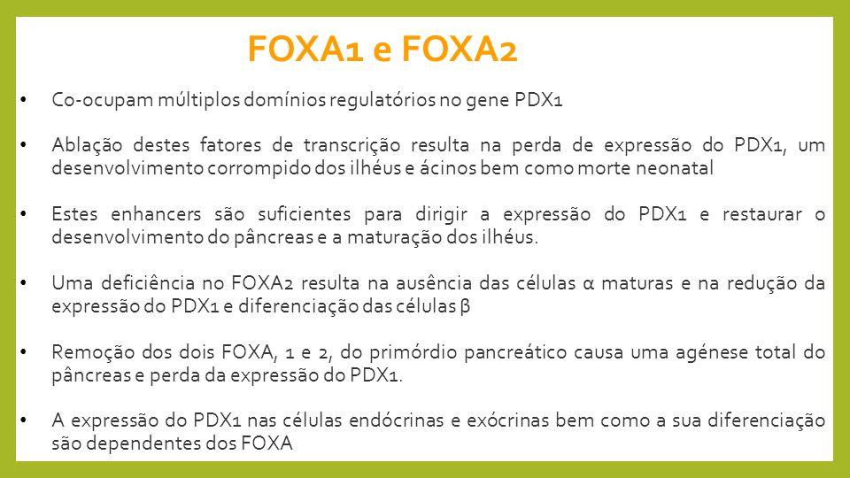 FOXA1 e FOXA2 Co-ocupam múltiplos domínios regulatórios no gene PDX1