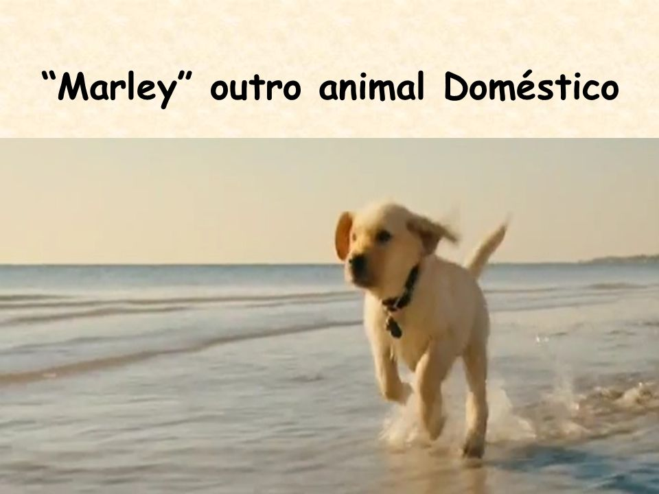 Marley outro animal Doméstico