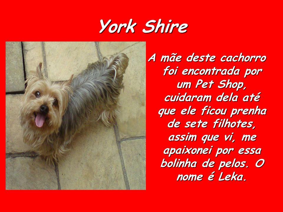 York Shire