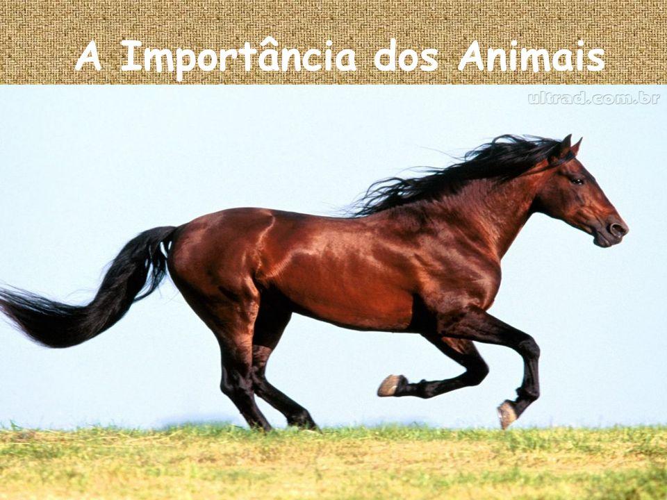 A Importância dos Animais