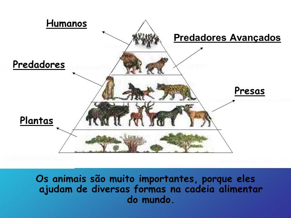 Humanos Predadores Avançados. Predadores. Presas. Plantas.