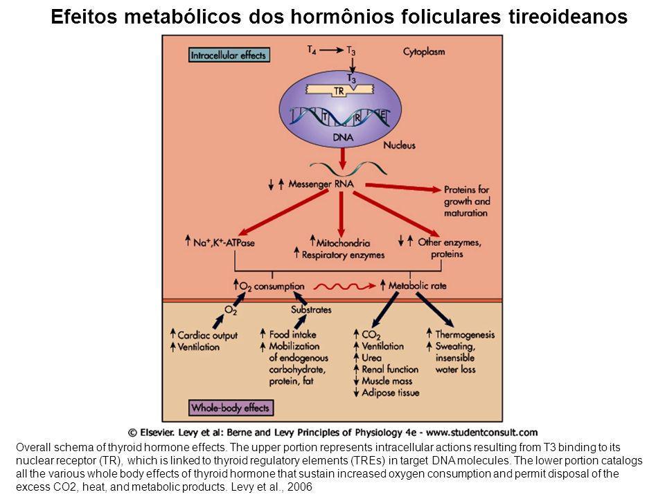 Efeitos metabólicos dos hormônios foliculares tireoideanos