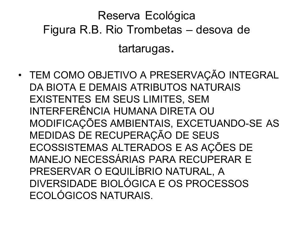 Reserva Ecológica Figura R.B. Rio Trombetas – desova de tartarugas.