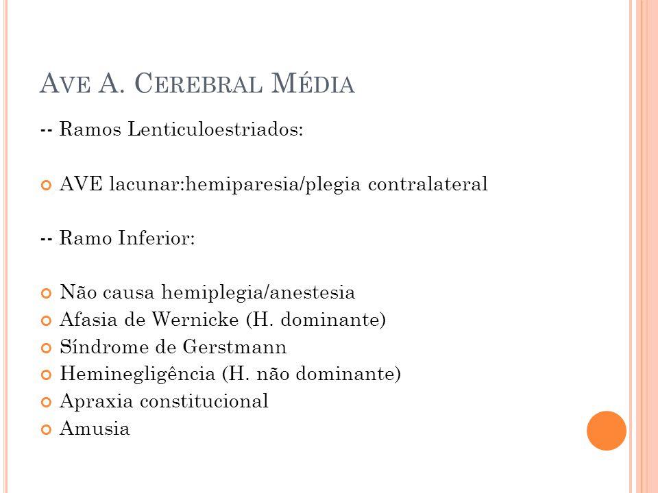 Ave A. Cerebral Média -- Ramos Lenticuloestriados:
