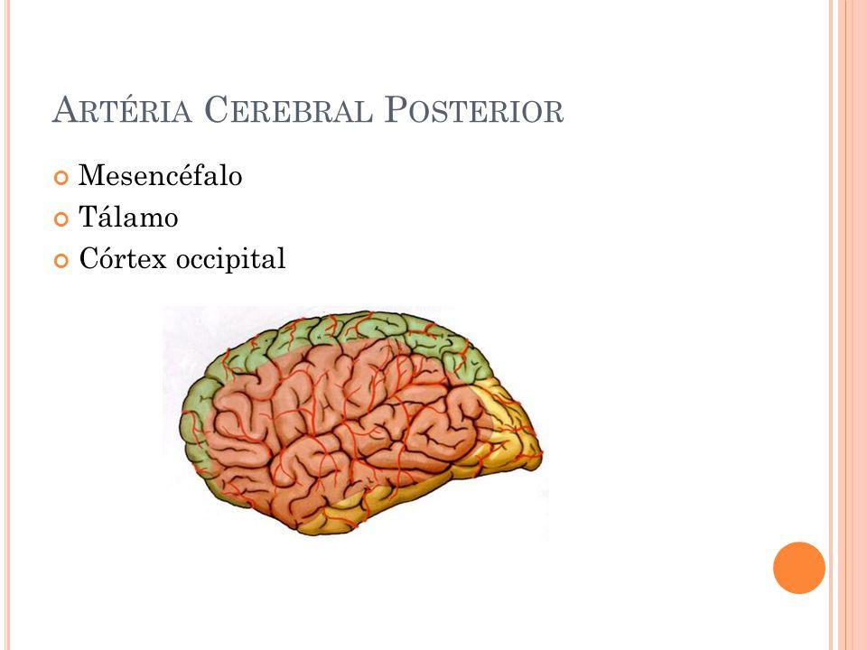 Artéria Cerebral Posterior