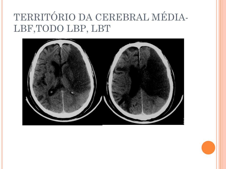 TERRITÓRIO DA CEREBRAL MÉDIA-LBF,TODO LBP, LBT