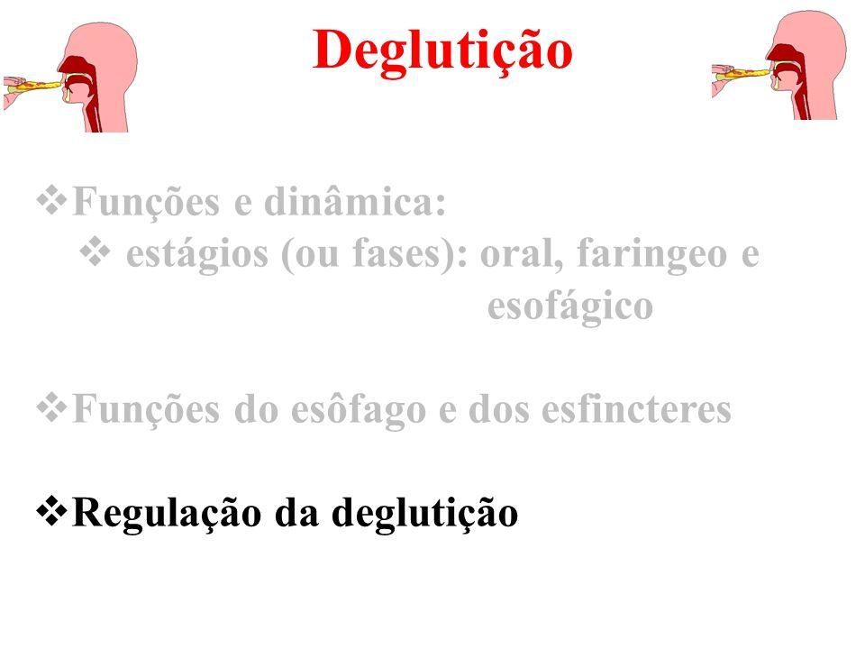 Deglutição Funções e dinâmica: estágios (ou fases): oral, faringeo e