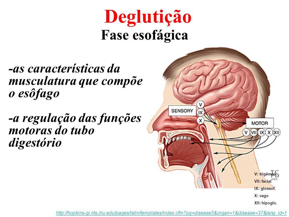 Deglutição Fase esofágica