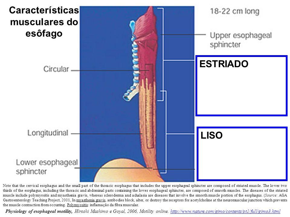 Características musculares do esôfago