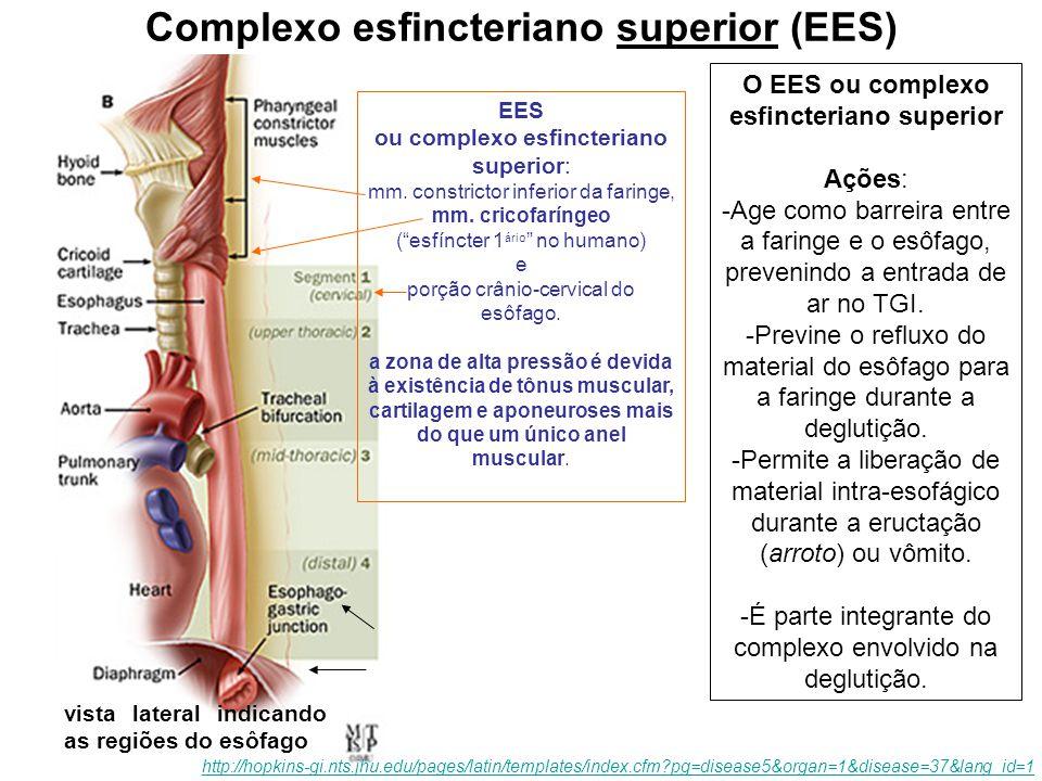 Complexo esfincteriano superior (EES)